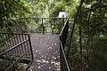 Minnamurra Rainforest - panoramio (36).jpg