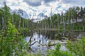 Mochow Moor Alter Teich 01.jpg