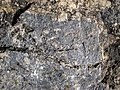Molybdenite vein in alkaline igneous host rock (Oligocene, 24-33 Ma; Climax Mine, Fremont Pass, Colorado, USA) 6 (19690939099).jpg