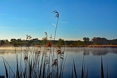Morgenstimmung Reinheimer Teich.jpg