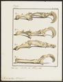 Myrmecophaga didactyla - skeletdelen - 1700-1880 - Print - Iconographia Zoologica - Special Collections University of Amsterdam - UBA01 IZ21000043.tif