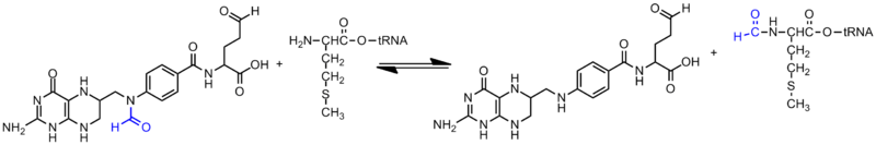 N-formylmethionine synthesis.png