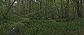 NSG Pestruper Moor Panorama 2 (June 2020).jpg