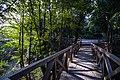 National Botanical Garden of Georgia باغ های بوتانیکال در شهر تفلیس گرجستان 18.jpg