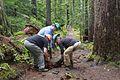 National Public Lands Day 2014 at Mount Rainier National Park (073), Narada.jpg