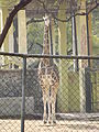 National Zoological Park 503.JPG
