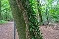 Natur im Neuenburger Urwald 20200912 DSC3809.jpg