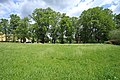Naturdenkmal Lindenallee in Lößnitz Erzgebirge 2H1A2756WI.jpg