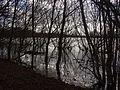 Naturschutzgebiet Alte Leine - Hochwasser (7).jpg