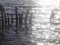Naturschutzgebiet Ewiges Meer 31-10-2018 Chr Didillon DSC01778 (94).jpg