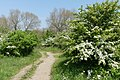 Natuur nabij wisentenuitkijkpunt P1140289.jpg