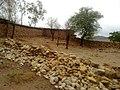 Navidhand last 177 - panoramio.jpg