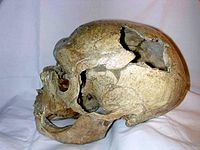Neandertal skull from la chapelle aux saints.jpg