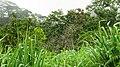 Nelliampathy Orange Farm - panoramio (8).jpg
