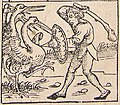 Nuremberg chronicles - Strange People - Pygmy (XIIr).jpg