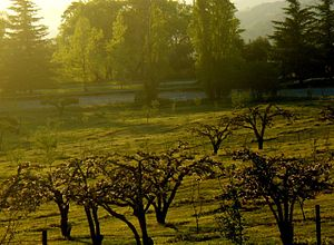 Oak Glen, San Bernardino County, California - One of Oak Glen's apple orchards