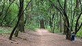 Ocotal forest 202006p1.jpg