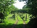 Old Orchard on Back Lane - geograph.org.uk - 1321731.jpg