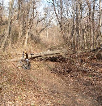 Urban forest - Forest has grown around an abandoned rail line in the city of Yonkers