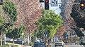 Ontario, CA, USA - panoramio (16).jpg
