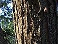 Opiliones- Daddy Long Leg - Harvestman.jpg