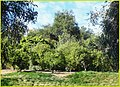 Orange Grove, Redlands 2-2-14e (12323487755).jpg