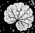 Orbicular (PSF).png