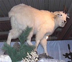 Goat - RationalWiki