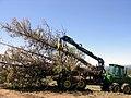 Oregon BLM Forestry 08 (6871707357).jpg