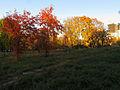 Orlyatko park, Kiev16.JPG