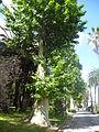 Orto botanico di Napoli 207.JPG