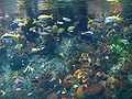Osaka Aquarium1.jpg