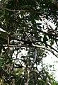 Overbridge rain forest (2719407073).jpg