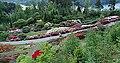 Oversikt rhododendronsorter Nydalen.jpg