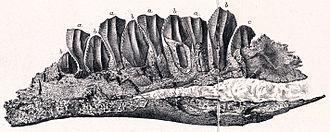 Berriasian - Owenodon