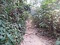 P34 Lawachara National Park, In Moulovibajar, Bangladesh.jpg