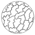PSM V21 D304 2 Epidermis and cell structure of leafs.png