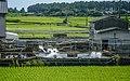 Paddy field in Wakayama City, Wakayama Prefecture; August 2016 (07).jpg