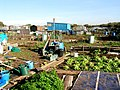 Palmerston Allotments, Barry - geograph.org.uk - 272223.jpg