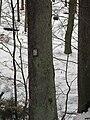 Památný strom s obrázkem - detail, Hornopožárský les.JPG