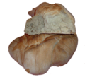 Pane a prosciutto.png