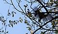 Parcul Mare (4110122674).jpg