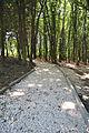 Park-Zdorovia-remont-15070300.jpg