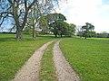 Parkland near Low Harperley - geograph.org.uk - 452423.jpg
