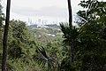 Parque Natural Metropolitano, Panamá-2048 - Flickr - Ragnhild & Neil Crawford.jpg