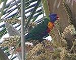 Parrot 1 (25340809889).jpg