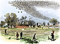 Passenger pigeon shooting in 1875