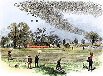 Varmint hunting - A contemporary woodcut of varmint hunters shooting passenger pigeons, a varmint species that was known to damage crops.