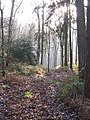 Path in Hackfall Wood - geograph.org.uk - 638643.jpg