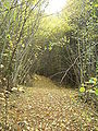 Path in Rila Autumn.JPG